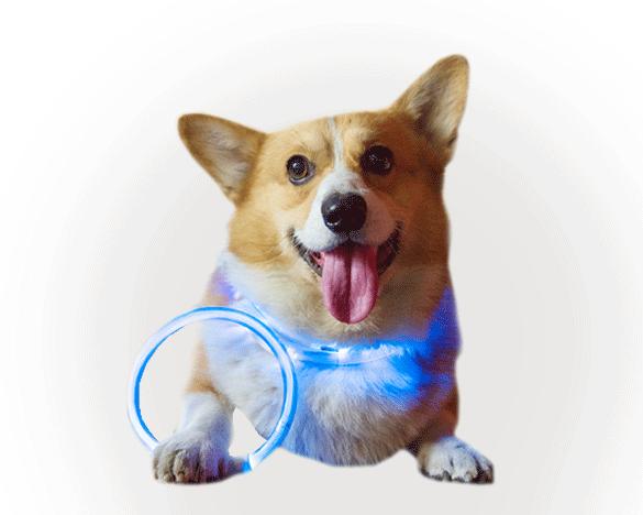 迪普尔USB充电式狗狗LED夜光圈