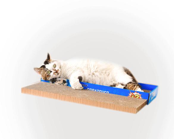 [新人3人团]得酷盒装两块猫抓板,二合一多功能猫抓板